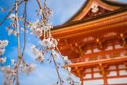 收藏!日本投资专业名词你知道多少?