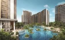 SingaporeSingapore-Coconut trees landscape
