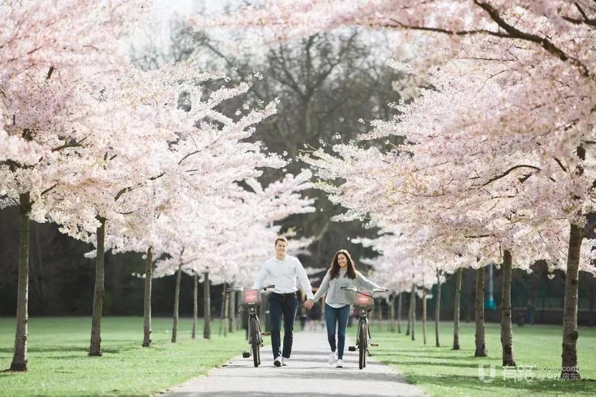 英国伦敦-九榆树