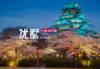 日本大阪-大阪民宿 天下茶屋站650米